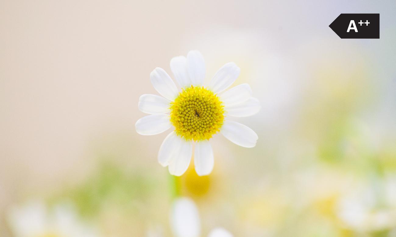pralka Beko WKB 51022 PL PTY jest bardzo oszczędna i chroni środowisko, w tym tego kwiatka