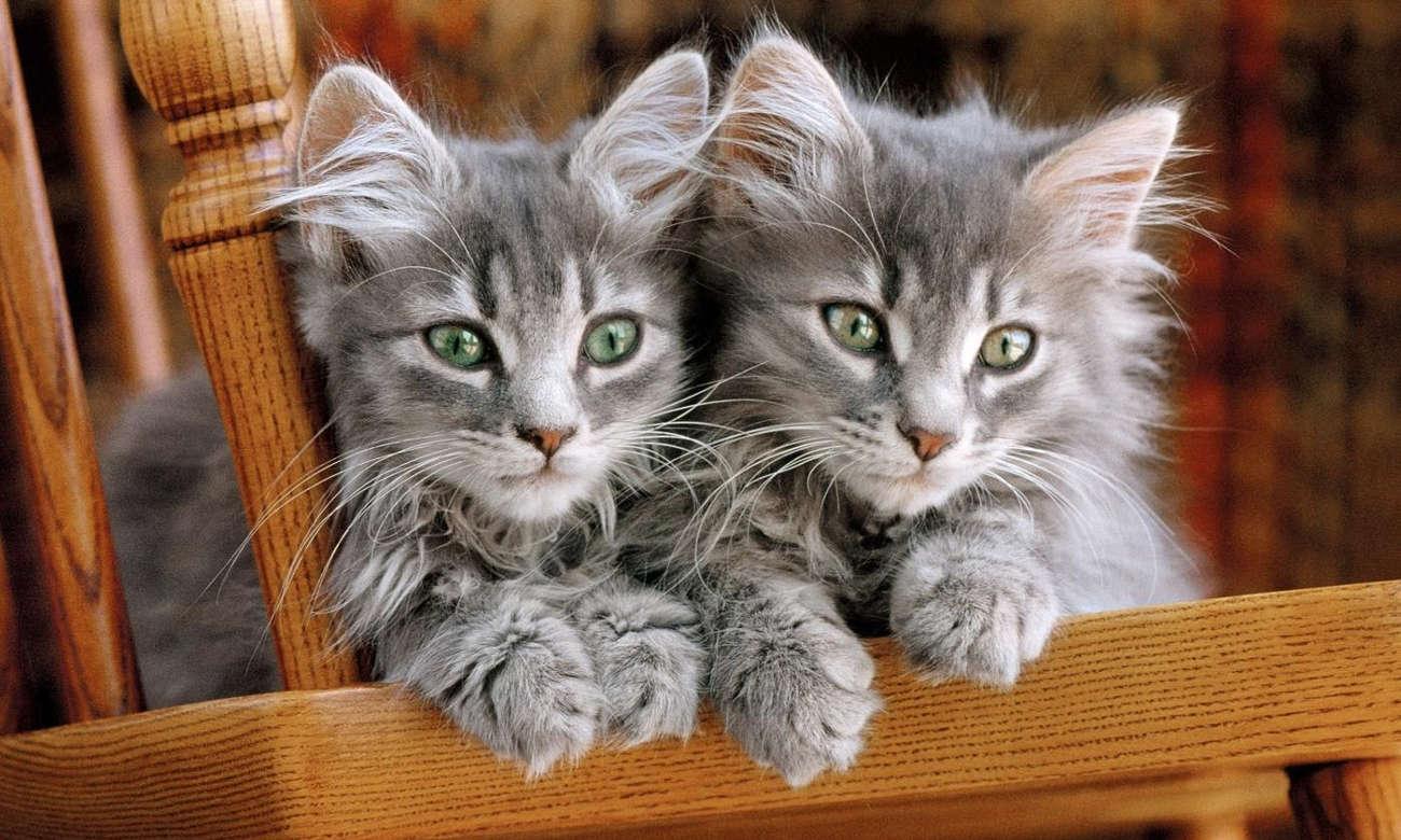 Clementoni Puzzle HQ Kittens 30545